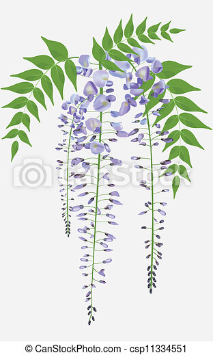 Clipart Vector Of Blooming Wisteria Branch With Leaves