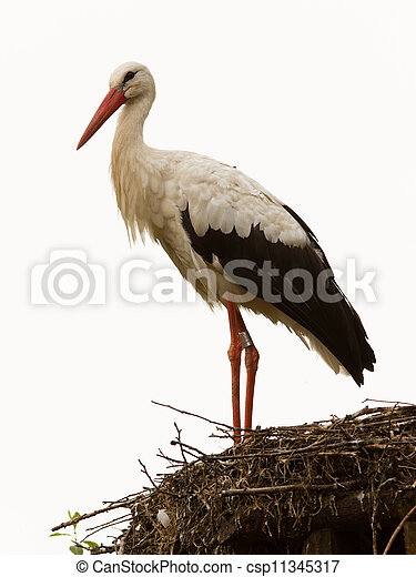 Adult stork in its natural habitat, on a nest - csp11345317