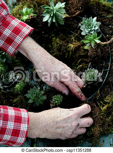 Crafting a succulent wreath