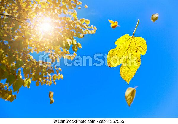 Fall - csp11357555