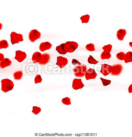 rosas, Pétalos, en, movimiento - csp11361011