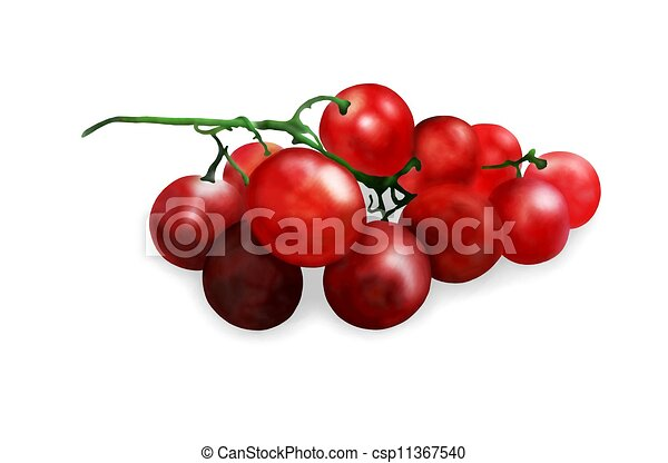 Hand Drawing of  Fresh Juicy Red Grapes - csp11367540