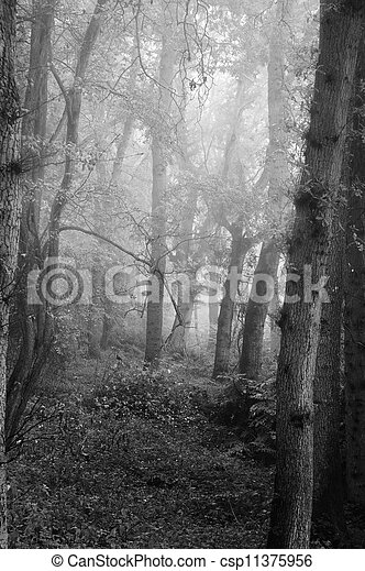 Beautiful Autumn Fall nature foggy forest landscape - csp11375956