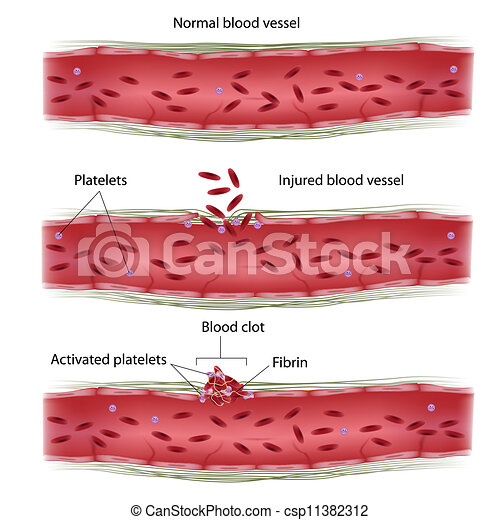 Blood Vessel Clipart