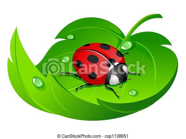 Clipart de coccinelle feuille coccinelle sur feuille isol sur csp1138651 - Dessin d une coccinelle ...