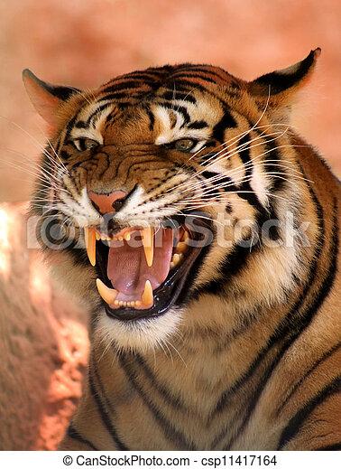 Stock De Imagenes De Enojado Cara Tigre Imagen Muy