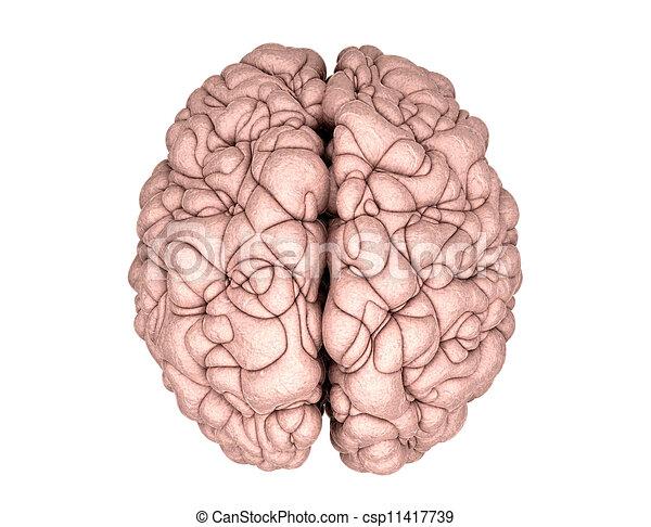Brain Drawing Top View Brain Drawing Top View Stock