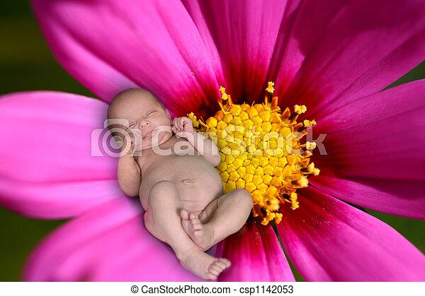 Fantasy Image of a Child Sleeping on a Magenta Daisy - csp1142053