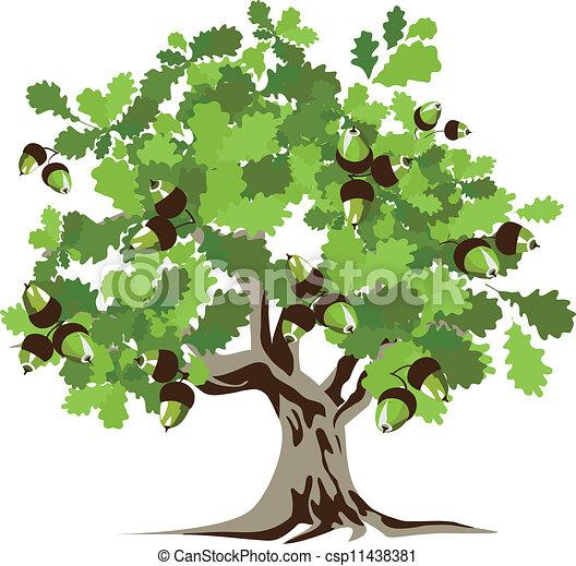Acorn Tree Drawing Big Green Oak Tree