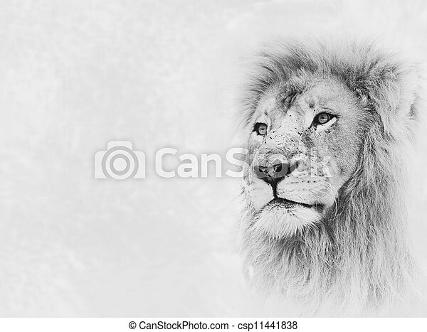 Lion Face on Card Banner - csp11441838
