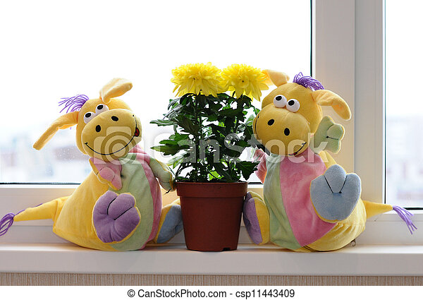 Yellow chrysanthemums on a window sill - csp11443409