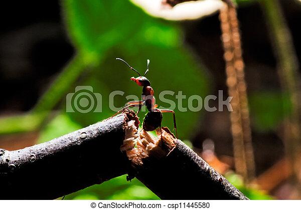 Images de bois fourmi cass branche csp11445580 for Achat branche bois