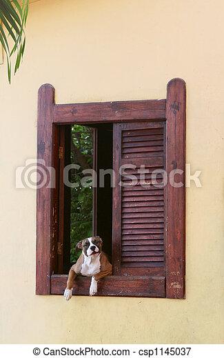 Guard Dog - csp1145037