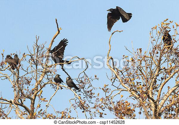 Birds 11452628