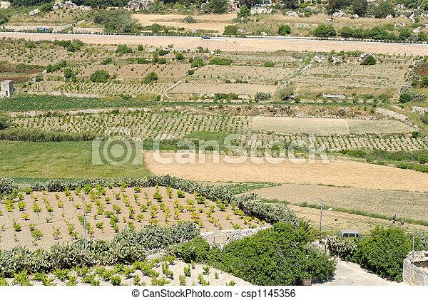 Maltese Fields - csp1145356