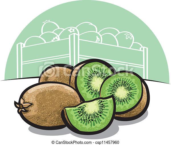 Kiwi Fruit Sketch Kiwi Fruit