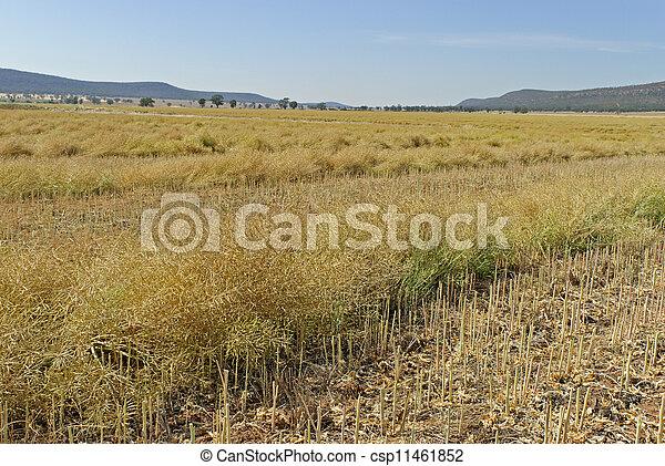 agriculture - csp11461852