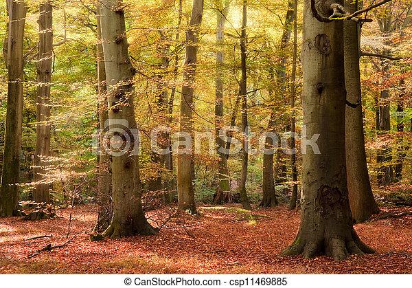 Vibrant Autumn Fall forest landscape image - csp11469885