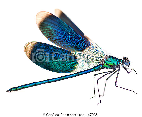 Dragonfly Isolated On White - csp11473081
