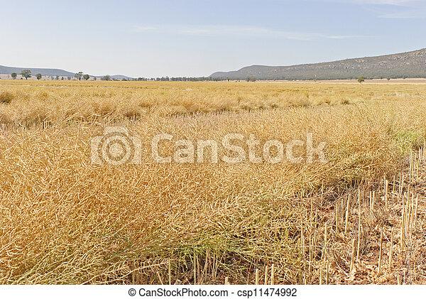 agriculture - csp11474992