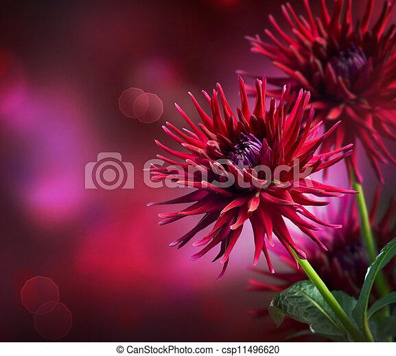 otoño, dalia, flor, diseño - csp11496620
