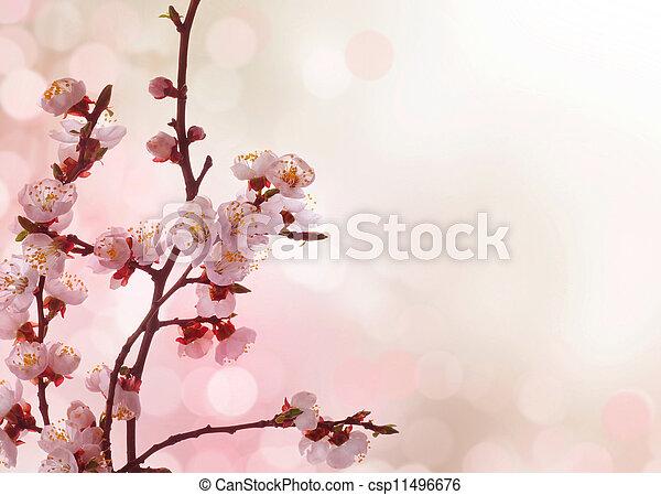 primavera, borda, Flores - csp11496676