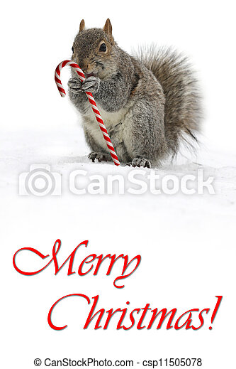 Squirrel holding a candycane - csp11505078