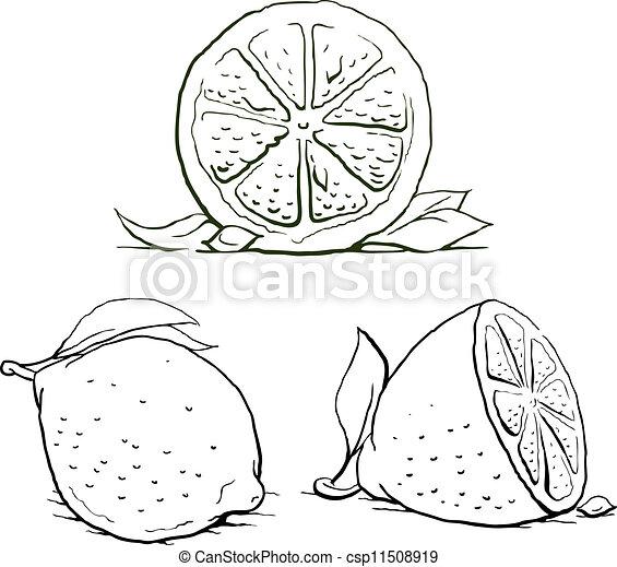Vector Clip Art of ripe lemon with leaf. vintage set ...