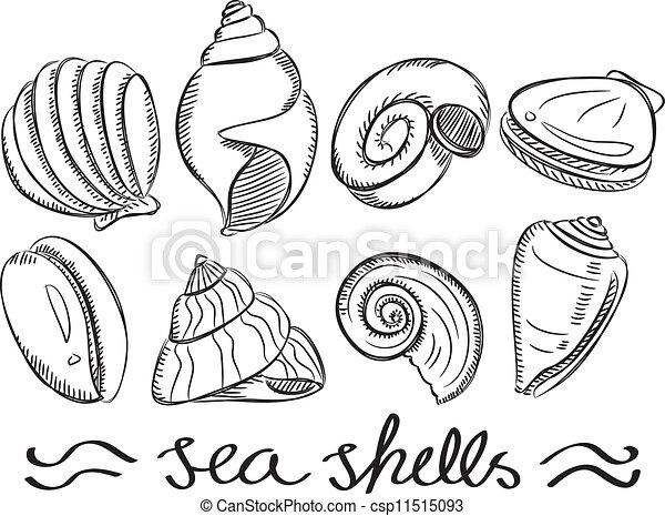 Ocean Shells Drawing Set of Sea Shells Doodle