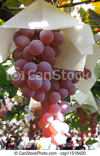 grape - csp11518420