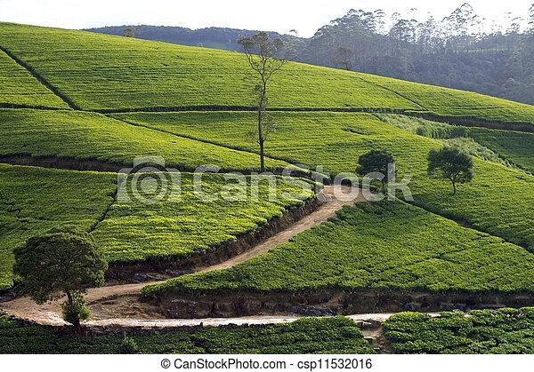Sri Lanka tea garden mountains in nuwara eliya - csp11532016