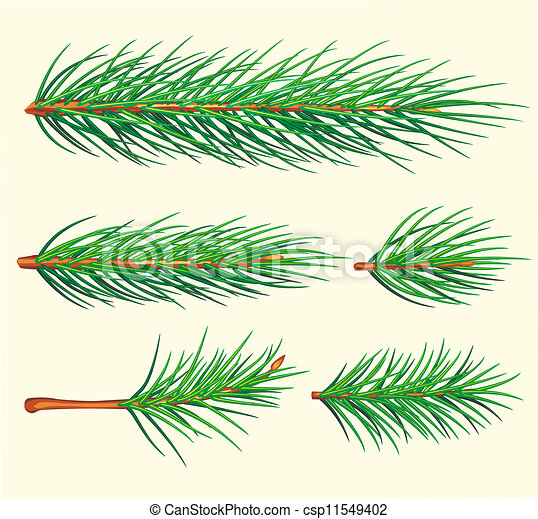 Vector Clipart Of Pine Branches Vector Brush Csp11549402