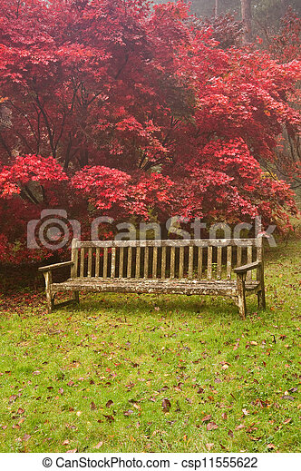Beautiful Autumn Fall nature image landscape - csp11555622