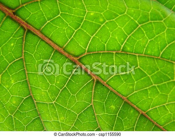 leaf macro lines