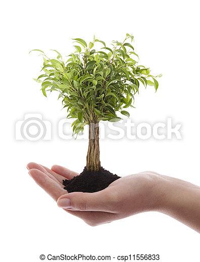 verde, árvore, segurando, mão - csp11556833