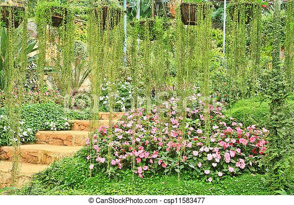 Beautiful flowers - csp11583477