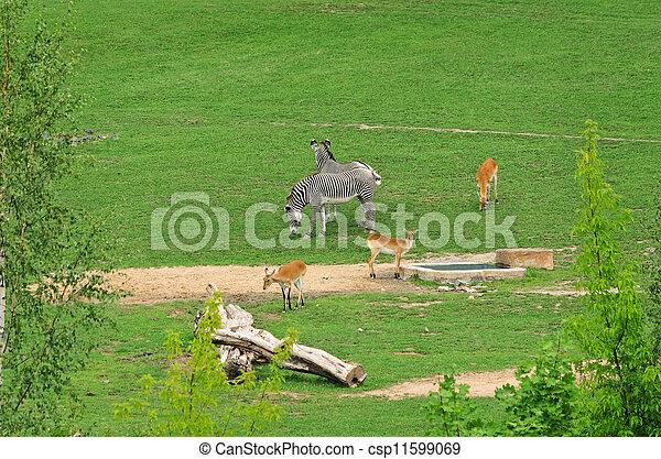 Hoofed Mammals - csp11599069