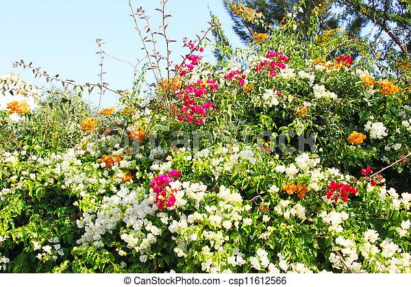 Tropical flower bush