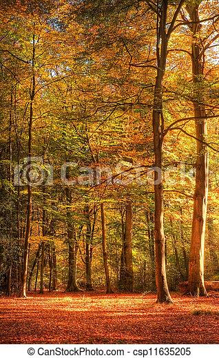 Vibrant Autumn Fall forest landscape image - csp11635205