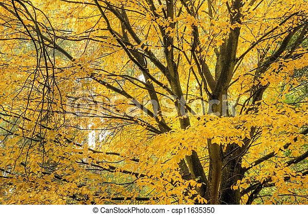 Beautiful Autumn Fall nature image landscape - csp11635350