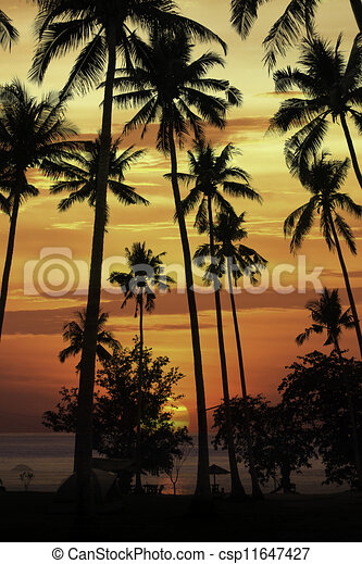 silhouette coconut tree at sunset - csp11647427