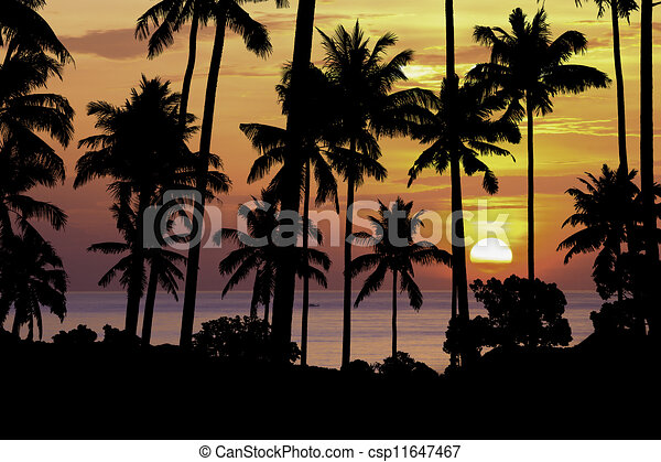 silhouette coconut tree at sunset - csp11647467