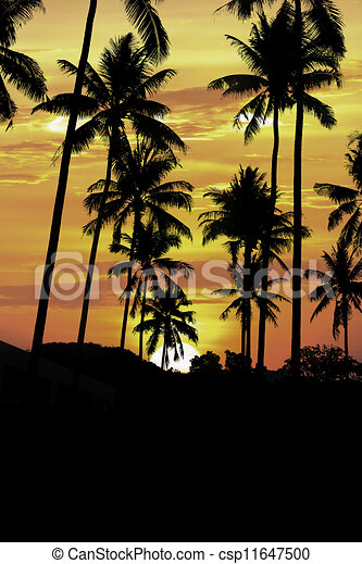 silhouette coconut tree at sunset - csp11647500