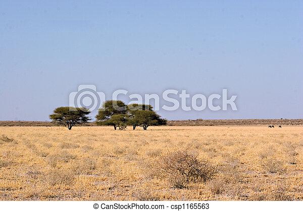 Central Kalahari Landscape - csp1165563