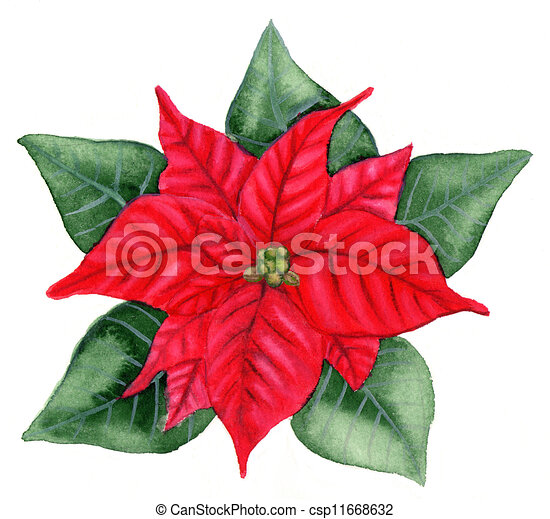 christmas flower images and stock photos. , christmas flower, Beautiful flower