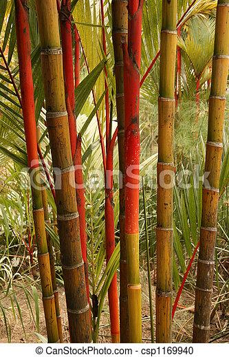 Tree - Botanical Gardens, Singapore - csp1169940