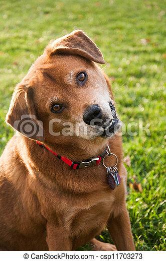 Head Tilt Dog