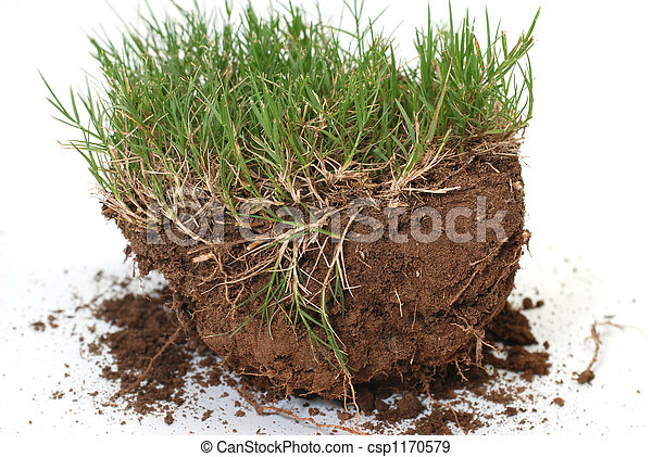 Plug of grass and dirt is - csp1170579