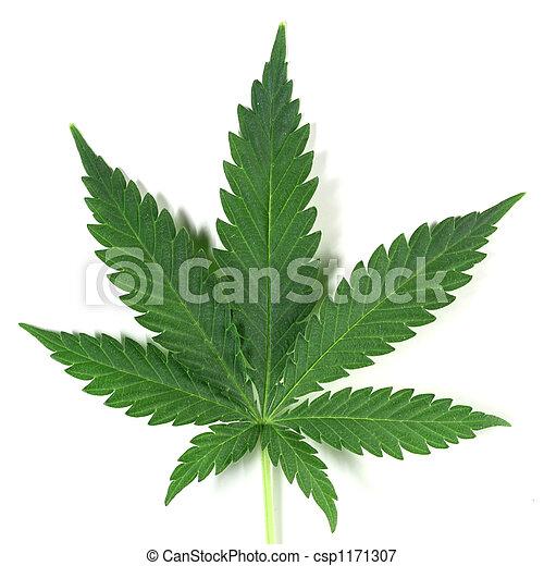 cannabis - csp1171307