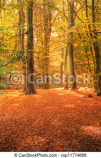 Vibrant Autumn Fall forest landscape image - csp11714688